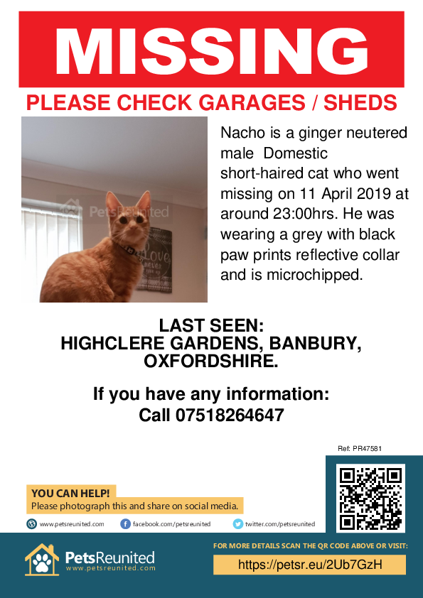 Lost pet poster - Lost cat: Ginger cat called Nacho