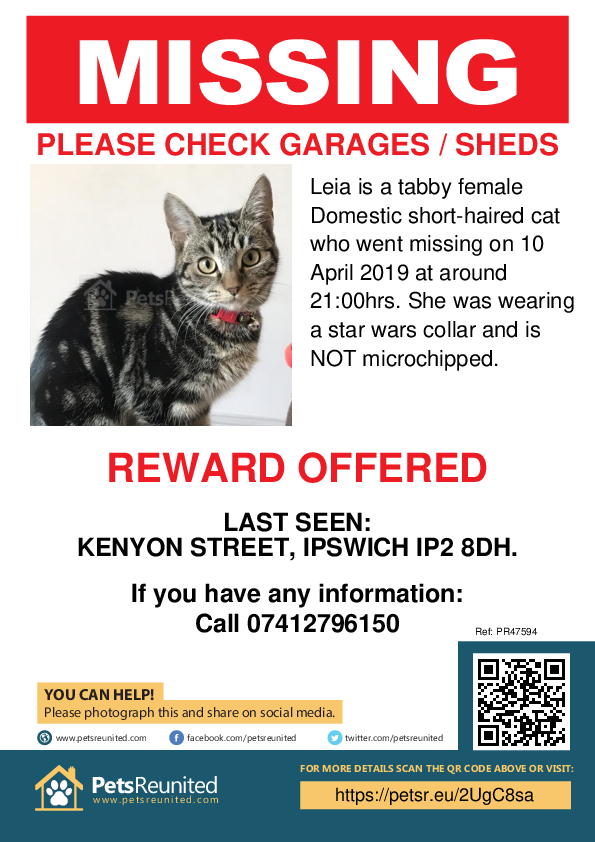 Lost pet poster - Lost cat: Tabby cat called Leia