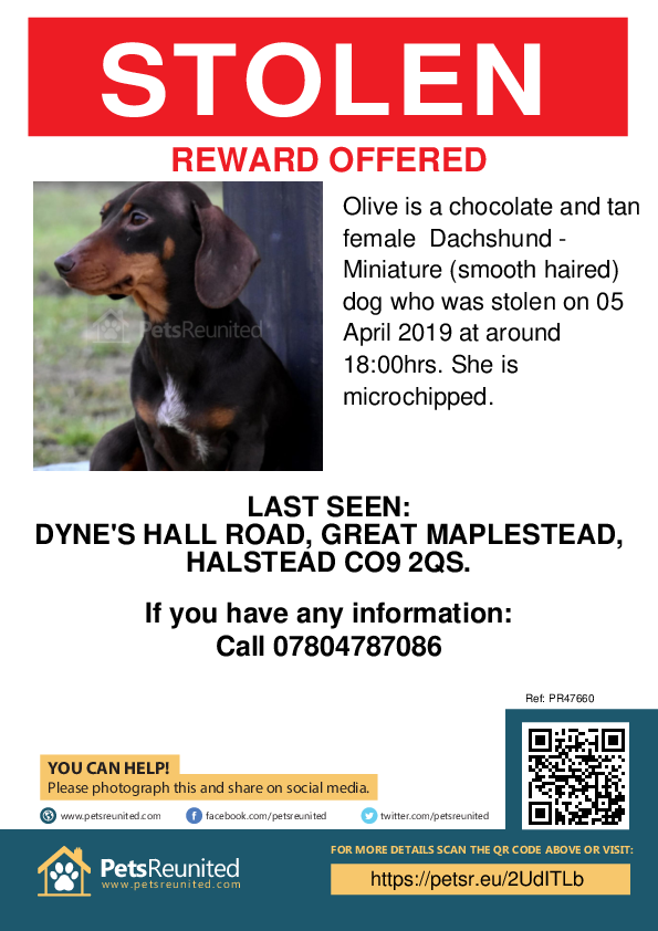 Stolen pet poster - Stolen dog: Chocolate and tan Dachshund - Miniature (smooth haired) dog called Olive