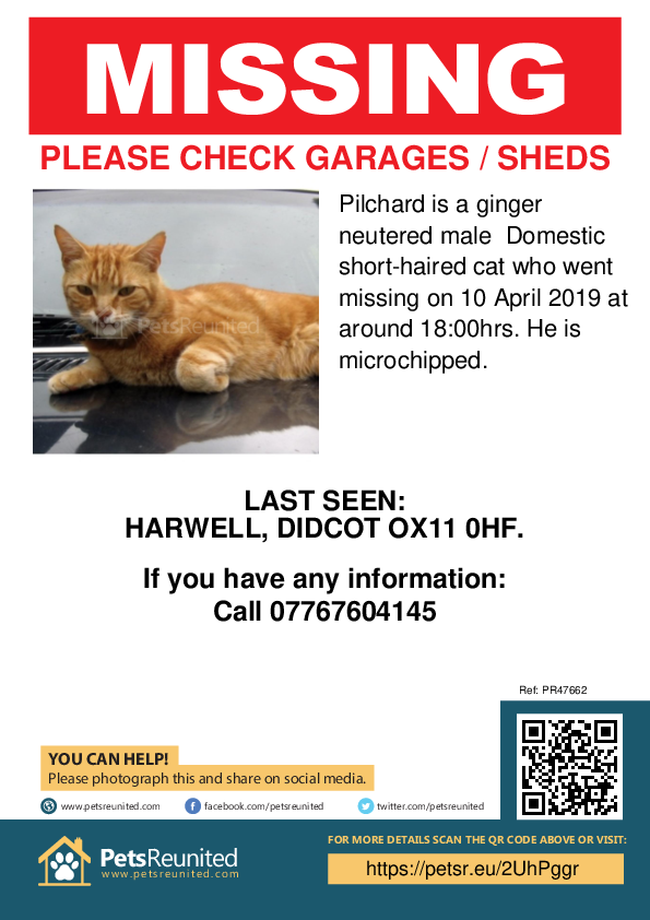 Lost pet poster - Lost cat: Ginger cat called Pilchard