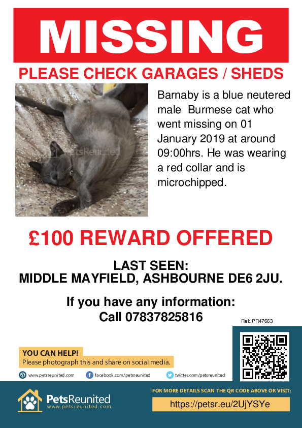 Lost pet poster - Lost cat: Blue Burmese cat called Barnaby