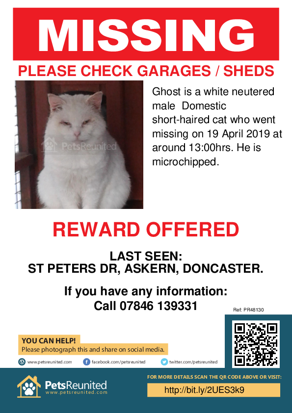 Lost pet poster - Lost cat: White cat called Ghost