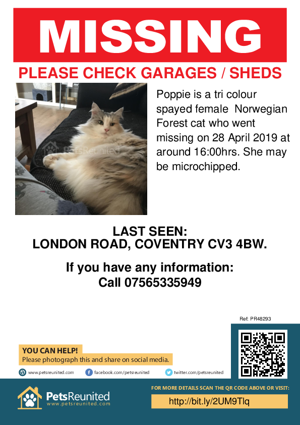 Lost pet poster - Lost cat: Tri Colour Norwegian Forest cat called Poppie