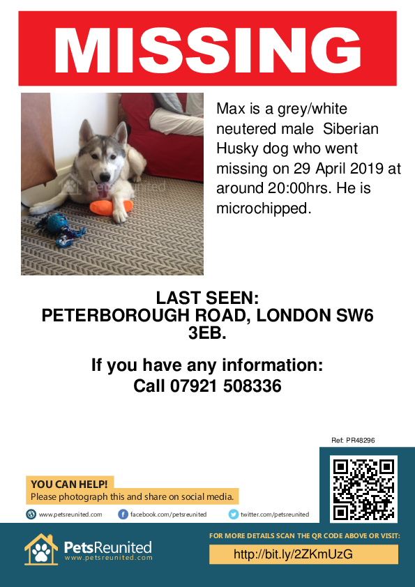 Lost pet poster - Lost dog: Grey/White Siberian Husky dog called Max