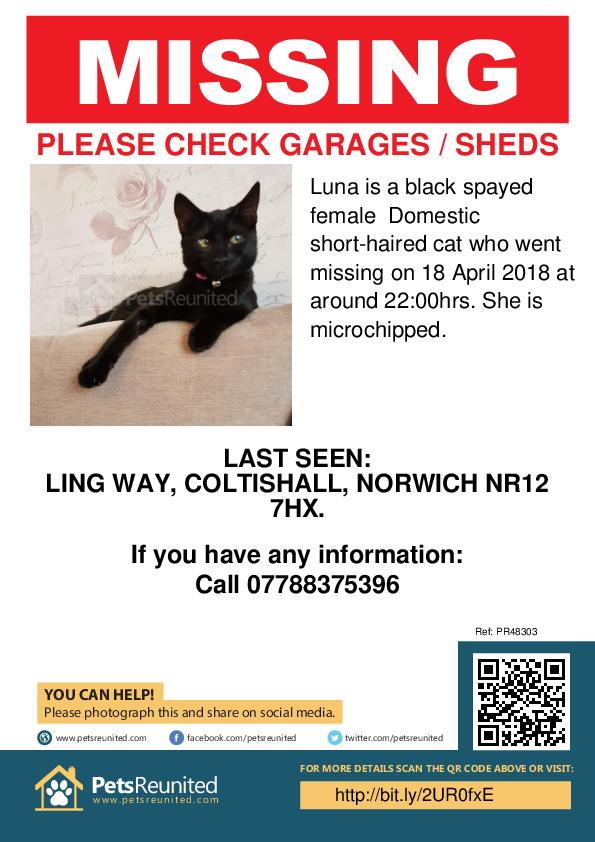 Lost pet poster - Lost cat: Black cat called Luna