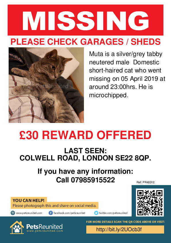 Lost pet poster - Lost cat: Silver/Grey Tabby cat called Muta
