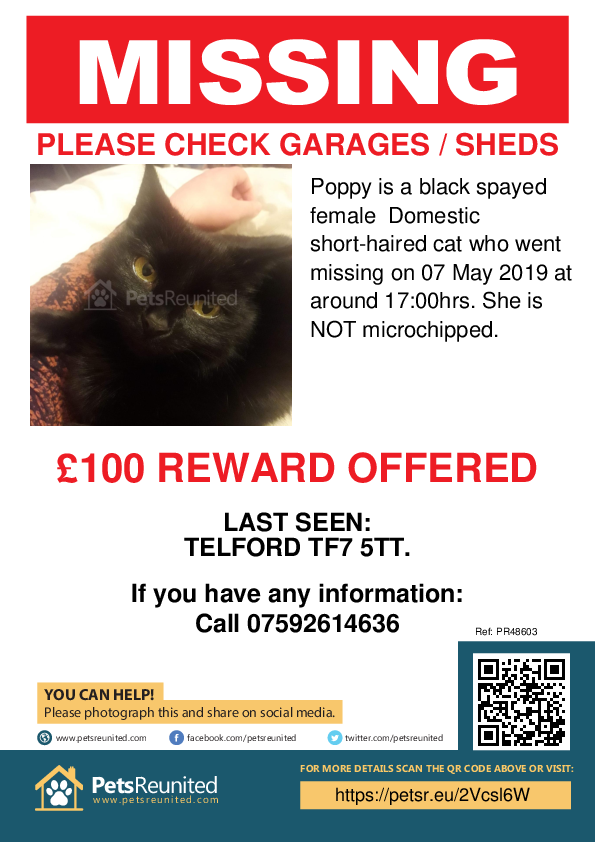 Lost pet poster - Lost cat: Black cat called Poppy