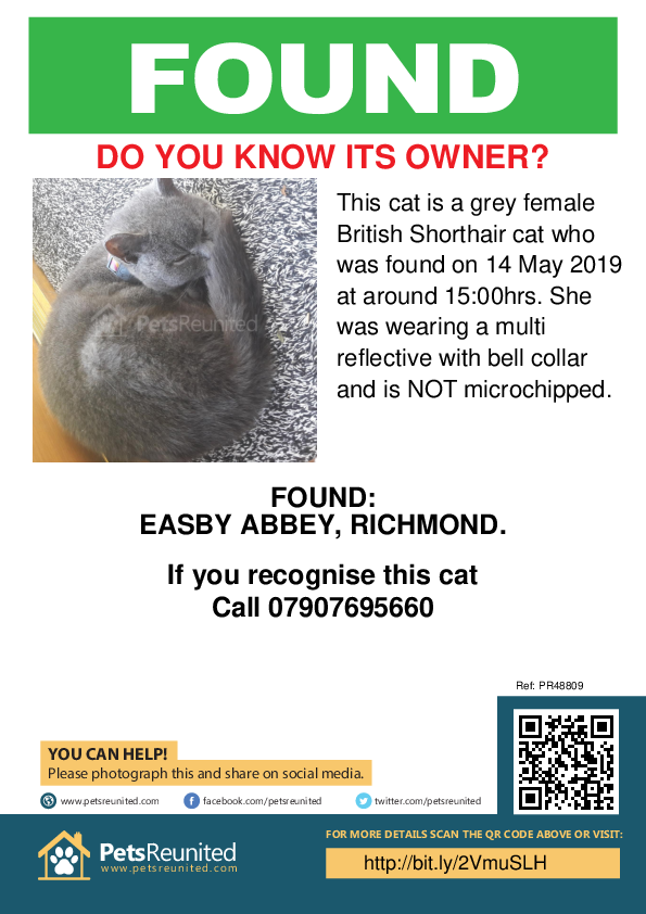 Found pet poster - Found cat: Grey British Shorthair cat