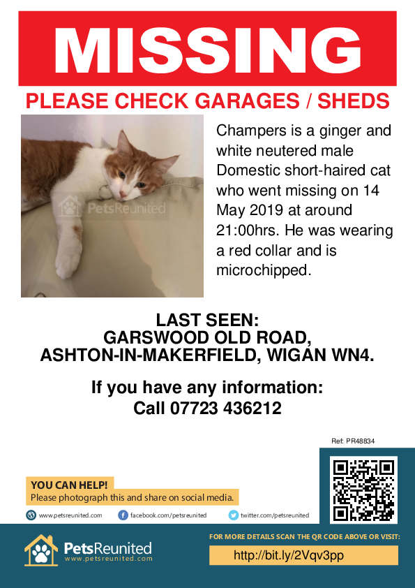 Lost pet poster - Lost cat: Ginger and white cat called Champers