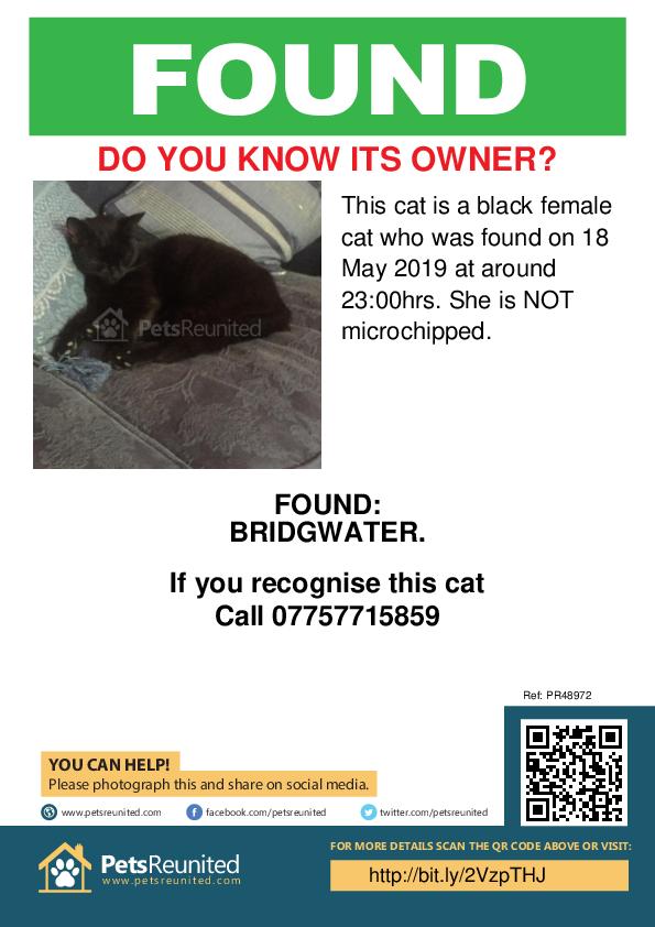 Found pet poster - Found cat: Black cat