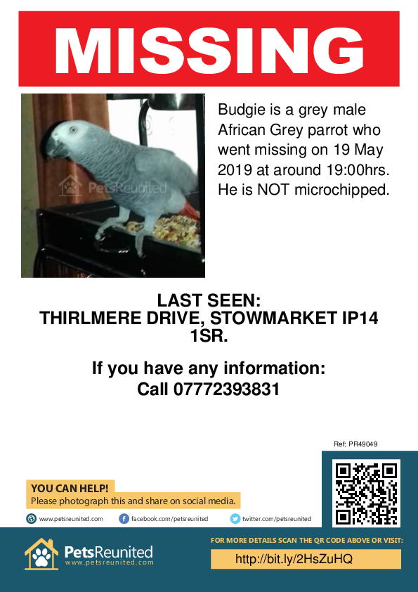 Lost pet poster - Lost parrot: Grey African Grey parrot called Budgie