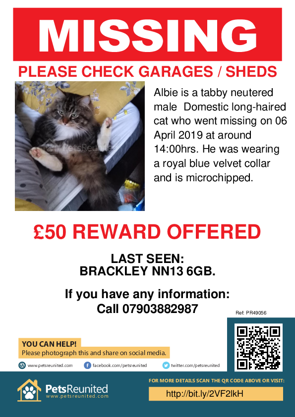 Lost pet poster - Lost cat: Tabby cat called Albie