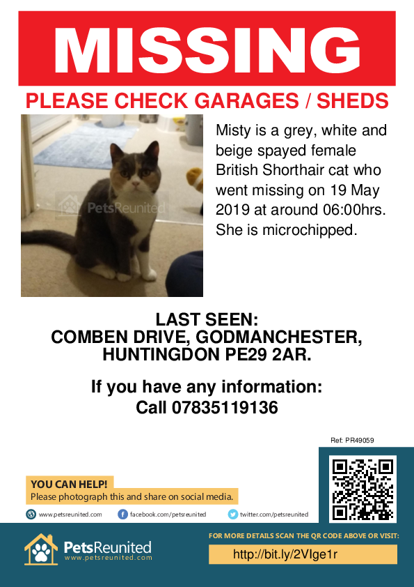 Lost pet poster - Lost cat: Grey, white and beige British Shorthair cat called Misty