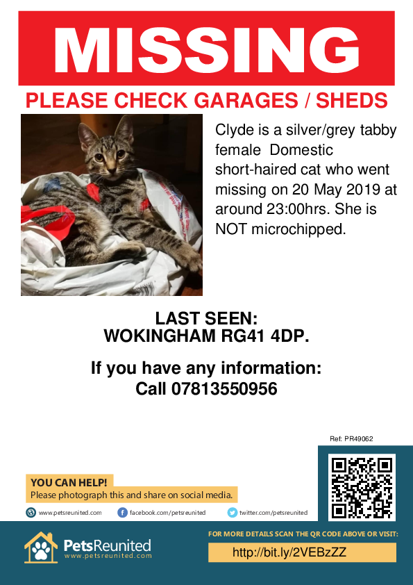 Lost pet poster - Lost cat: Silver/Grey Tabby cat called Clyde