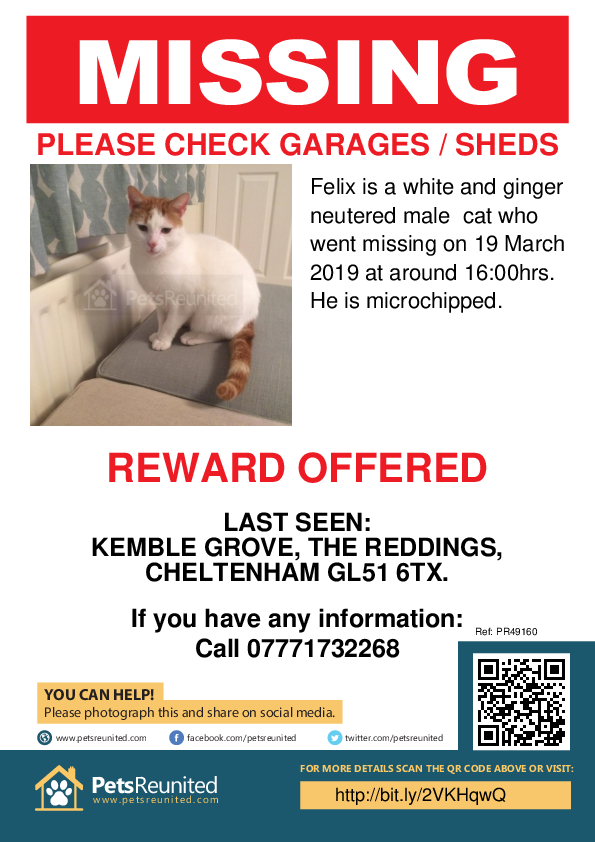 Lost pet poster - Lost cat: White and ginger cat called Felix