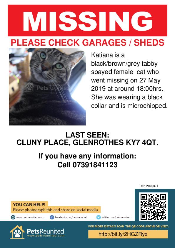 Lost pet poster - Lost cat: Black/brown/grey tabby cat called Katiana