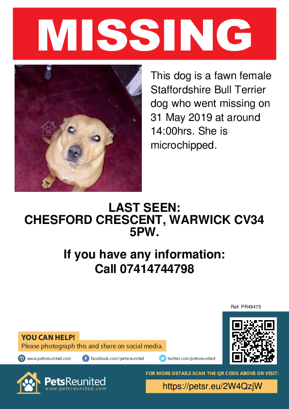Lost pet poster - Lost dog: Fawn Staffordshire Bull Terrier dog [name witheld]