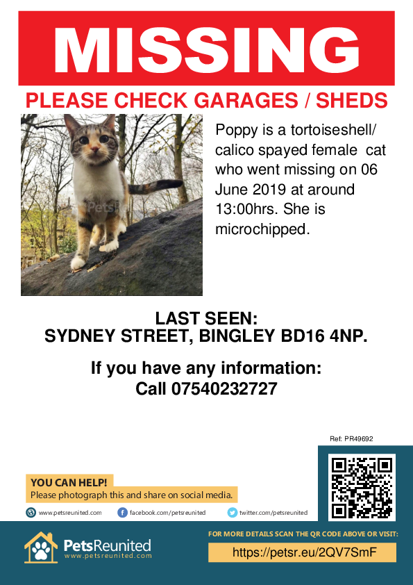 Lost pet poster - Lost cat: Tortoiseshell/ Calico cat called Poppy