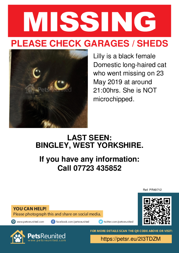 Lost pet poster - Lost cat: Black cat called Lilly