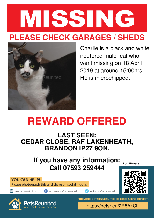 Lost pet poster - Lost cat: Black and white cat called Charlie