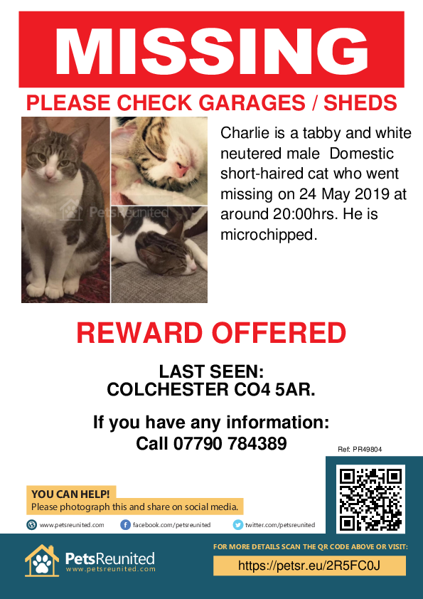 Lost pet poster - Lost cat: Tortoiseshell and white cat called Charlie