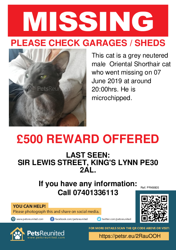 Lost pet poster - Lost cat: Grey Oriental Shorthair cat [name witheld]