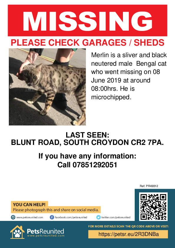 Lost pet poster - Lost cat: Sliver and Black Bengal cat called Merlin