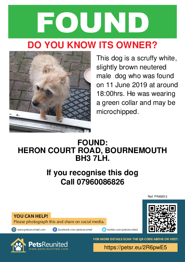 Found pet poster - Found dog: Scruffy white, slightly brown dog