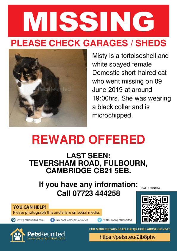 Lost pet poster - Lost cat: Tortoiseshell and white cat called Misty