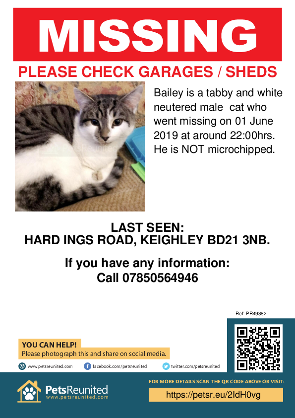 Lost pet poster - Lost cat: Tabby and white cat called Bailey