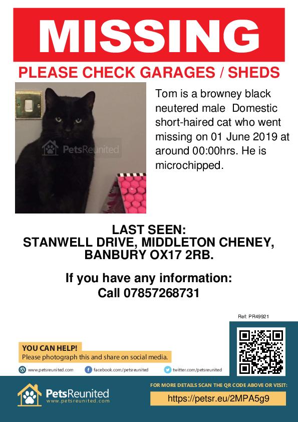 Lost pet poster - Lost cat: Browney black cat called Tom