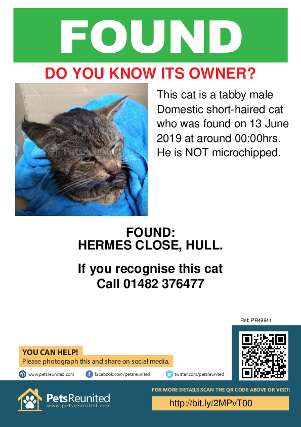 Found pet poster - Found deceased Tabby cat