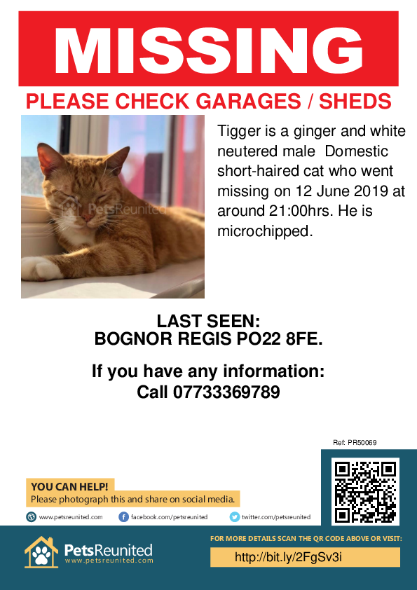 Lost pet poster - Lost cat: Ginger and white cat called Tigger