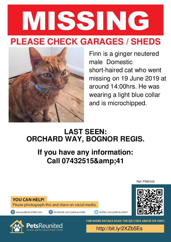 Lost pet poster - Lost cat: Ginger cat called Finn