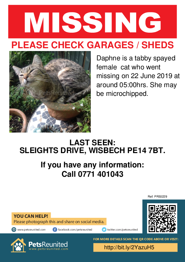 Lost pet poster - Lost cat: Tabby cat called Daphne