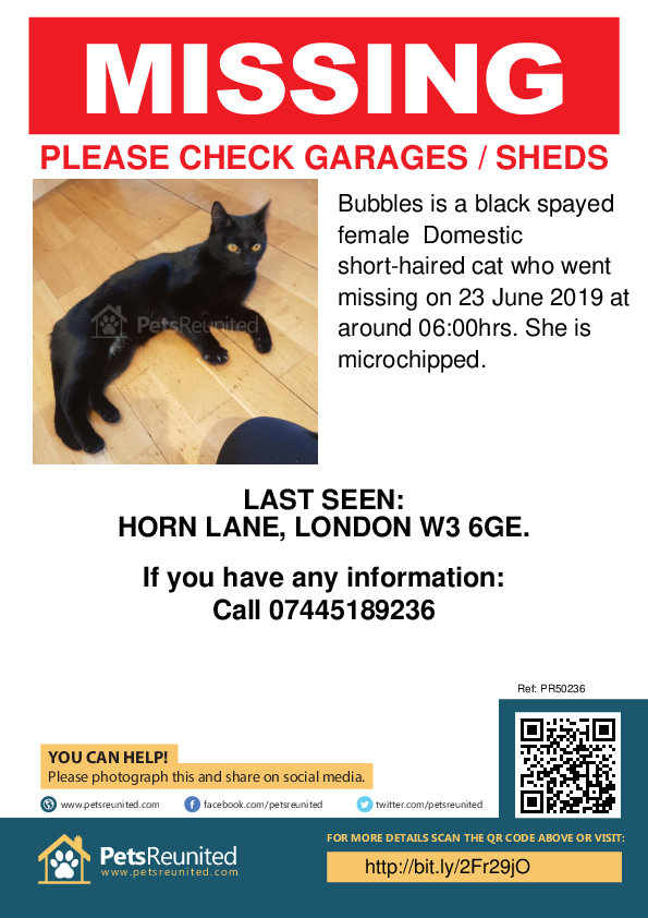 Lost pet poster - Lost cat: Black cat called Bubbles