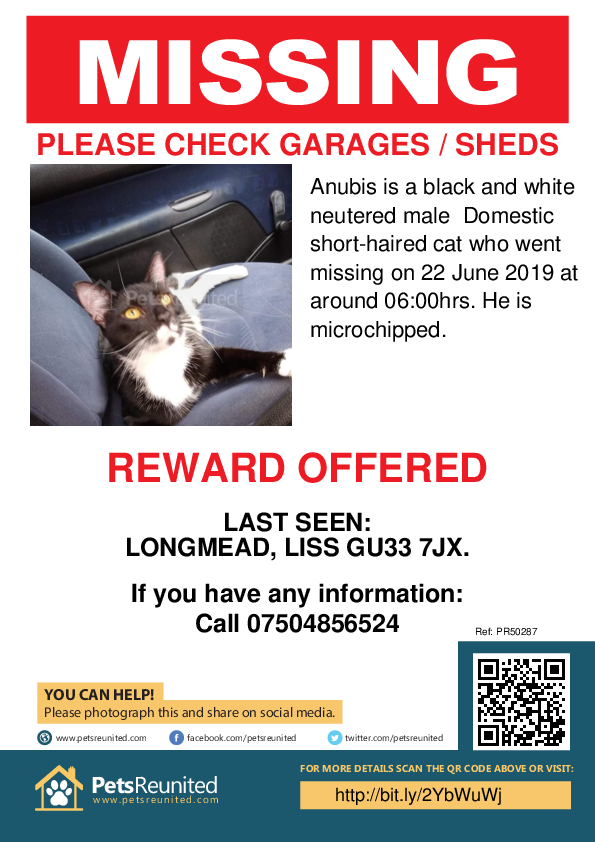 Lost pet poster - Lost cat: Black and white cat called Anubis