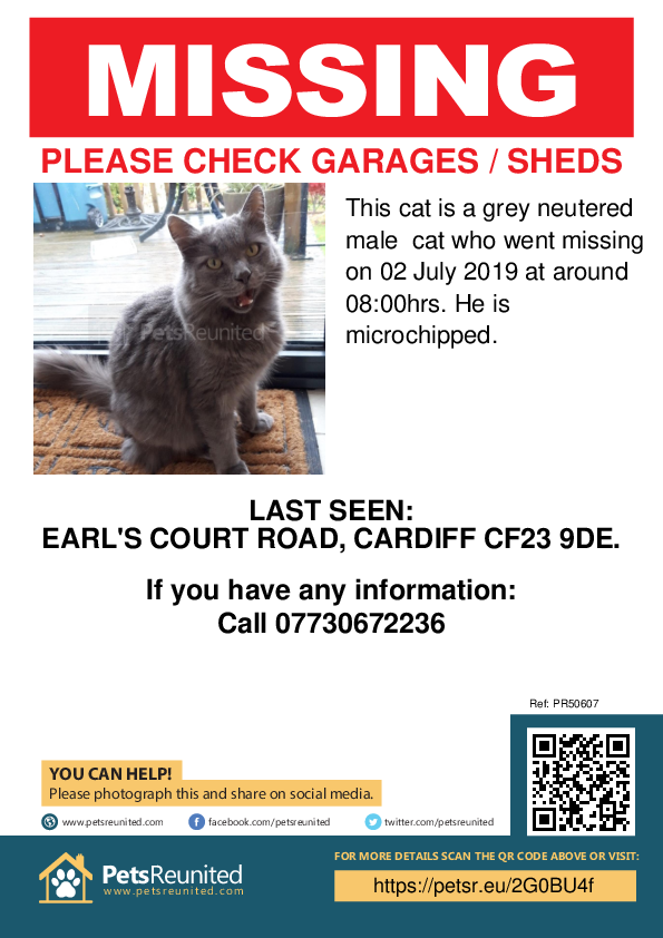Lost pet poster - Lost cat: Grey cat [name witheld]