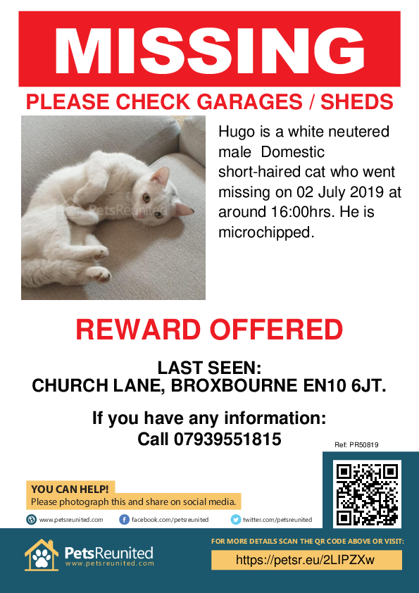 Lost pet poster - Lost cat: White cat called Hugo