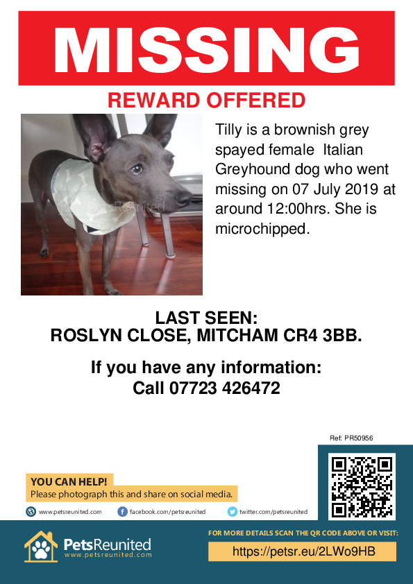 Lost pet poster - Lost dog: Brownish grey Italian Greyhound dog called Tilly