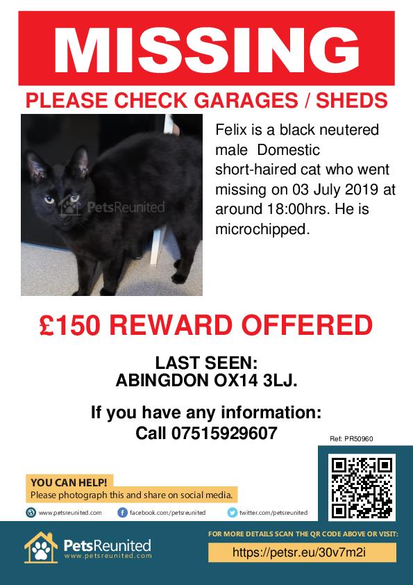 Lost pet poster - Lost cat: Black cat called Felix