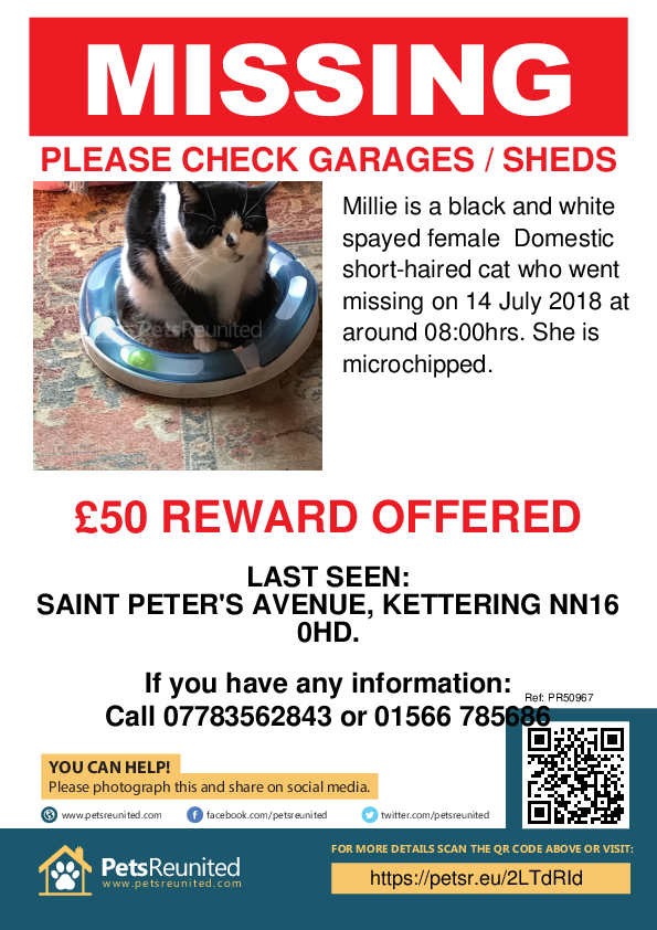 Lost pet poster - Lost cat: Black and white cat called Millie