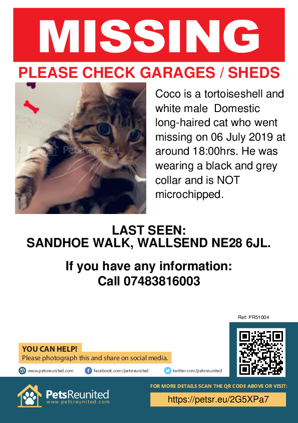 Lost pet poster - Lost cat: Tortoiseshell and white cat called Coco