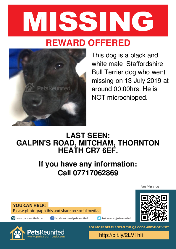 Lost pet poster - Lost dog: Black and white Staffordshire Bull Terrier dog [name witheld]