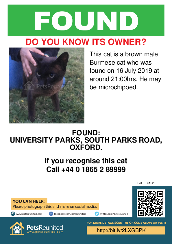 Found pet poster - Found cat: Brown Burmese cat