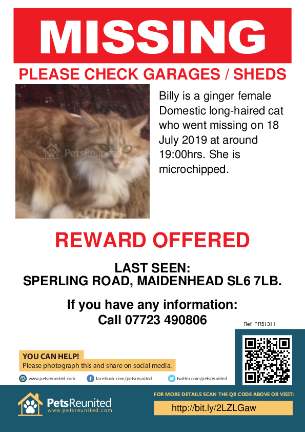 Lost pet poster - Lost cat: Ginger cat called Billy