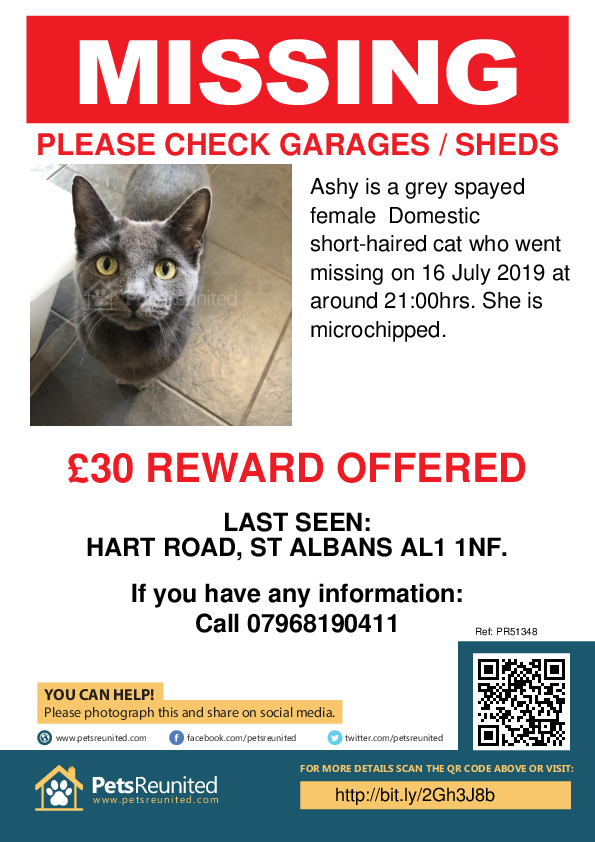 Lost pet poster - Lost cat: Grey cat called Ashy