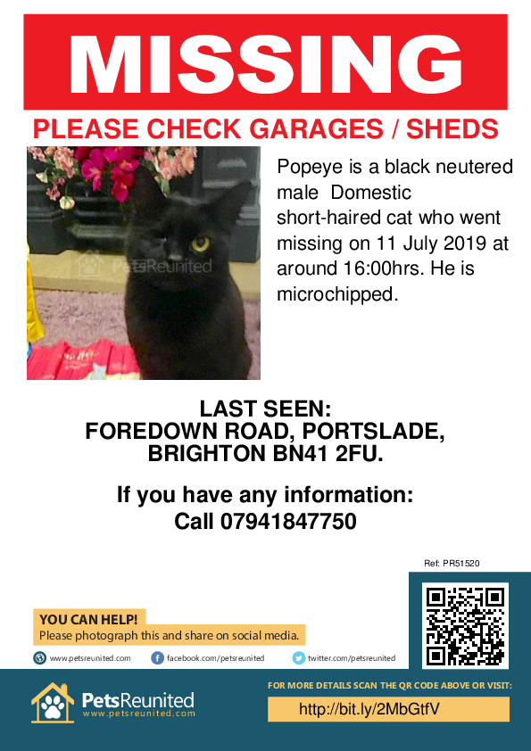 Lost pet poster - Lost cat: Black cat called Popeye