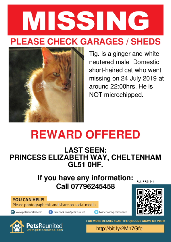Lost pet poster - Lost cat: Ginger and white cat called Tig.