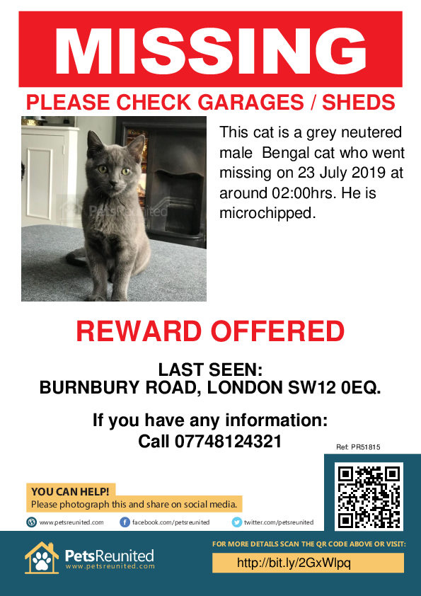 Lost pet poster - Lost cat: Grey Bengal cat [name witheld]